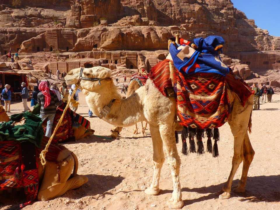 bikaner camel festival, bikaner, rajasthan