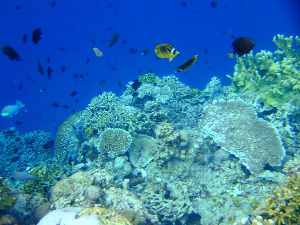 Blue Bay Marine Park, Snorkelling in Mauritius