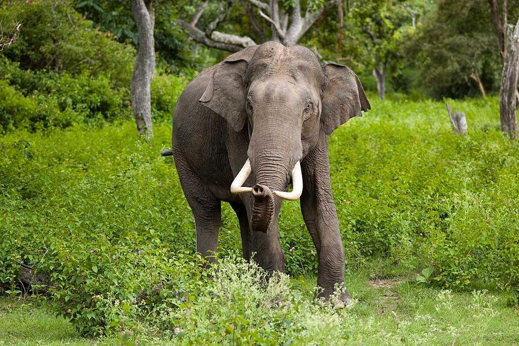Elephant Sanctuaries in India