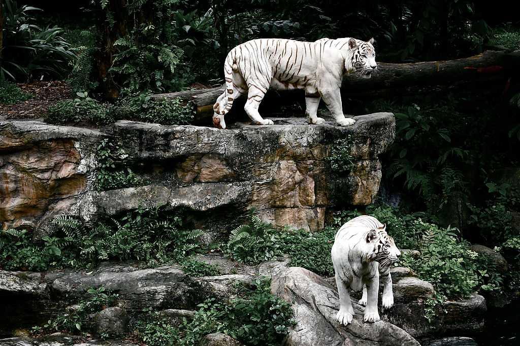 Singapore Zoo, Singapore in November