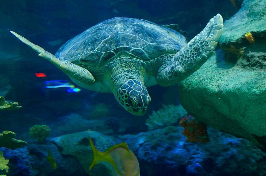 Turtles at Kelly Tarlton's Sea Life Aquarium
