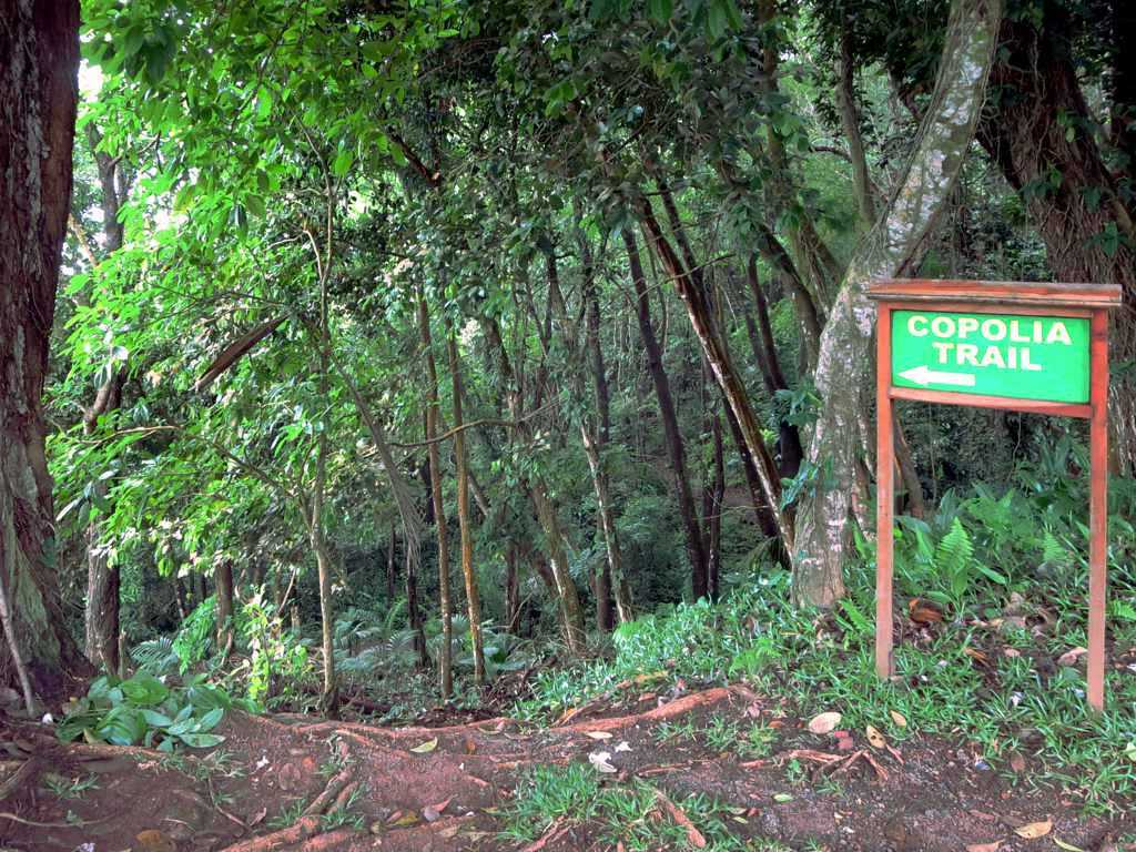 Copolia trail Seychelles