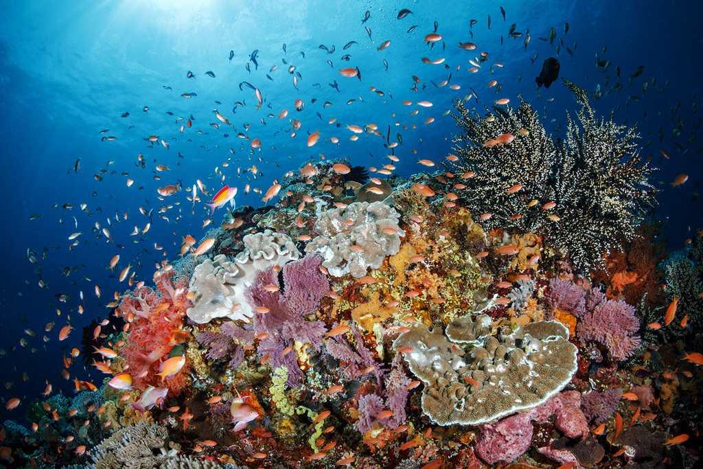 Toyapakeh Reef Nusa Penida Bali