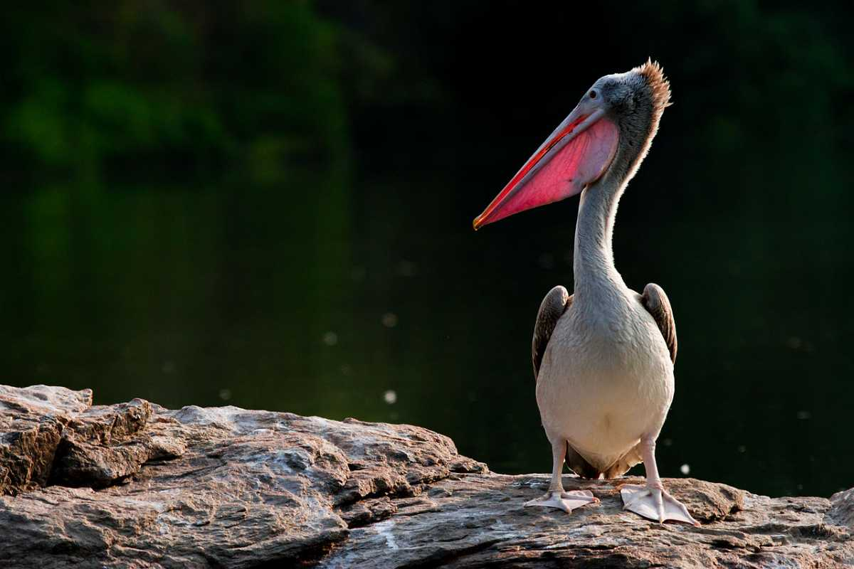 Bird Habitat at Madiwala Lake