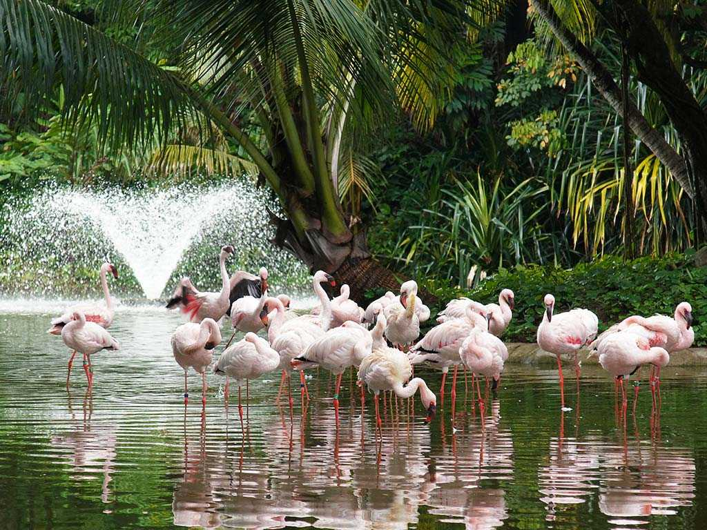 Flamingo at Jurong Bird Park
