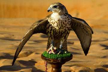 National bird of the United Arab Emirates