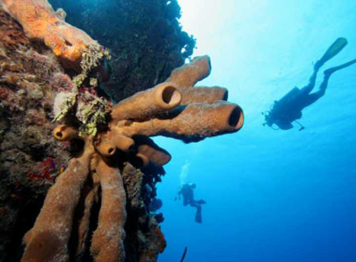 Napoleon Rock, Diving Site, Scuba Diving in Seychelles