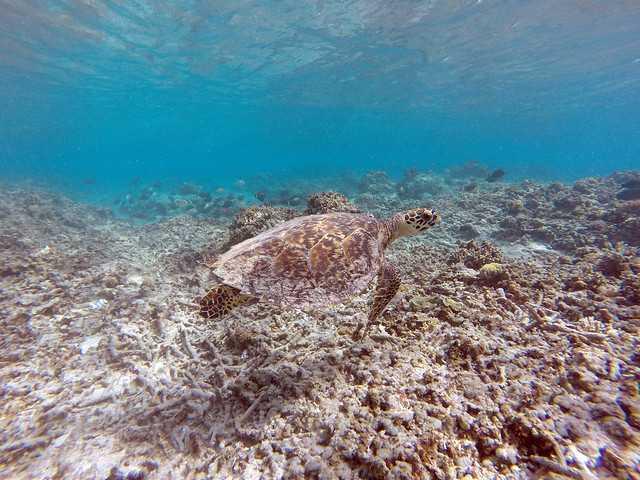Snorkelling at Gili Meno Island
