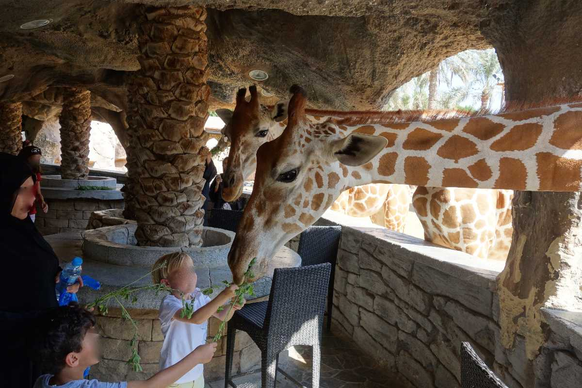 Feeding the giraffes at Giraffe Park, Emirates Park Zoo