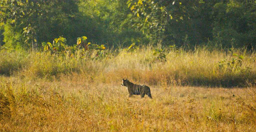 Winter in Tadoba National Park