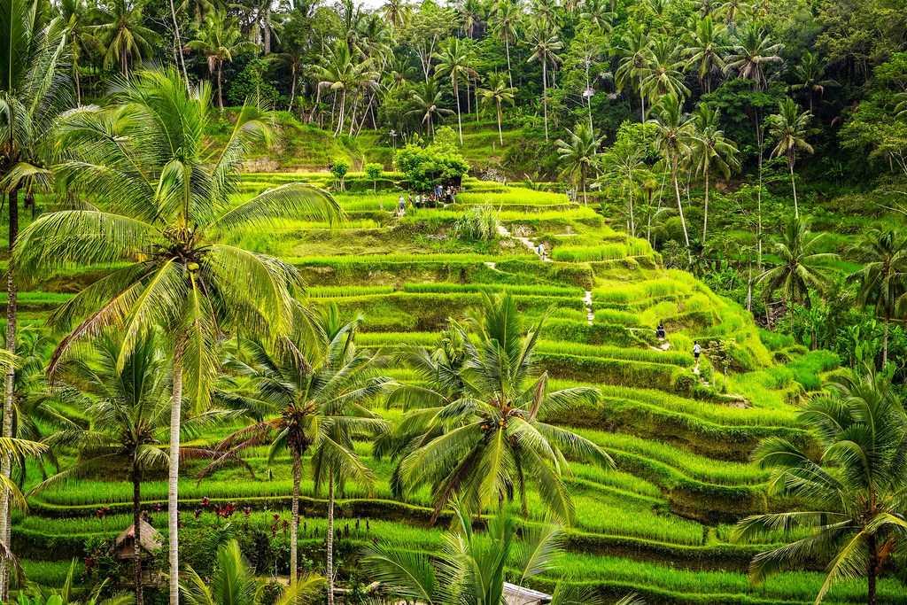 Honeymoon in Bali, Tegalalang Rice Fields