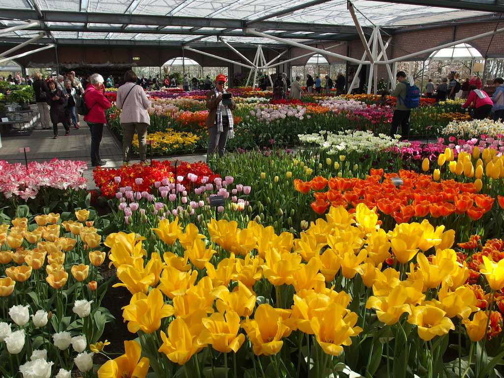 Flower show at Willem-Alexander Pavilion at Keukenhof
