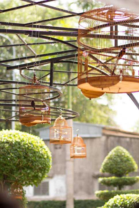 Birds at Tao Dan Park Ho Chi Minh City