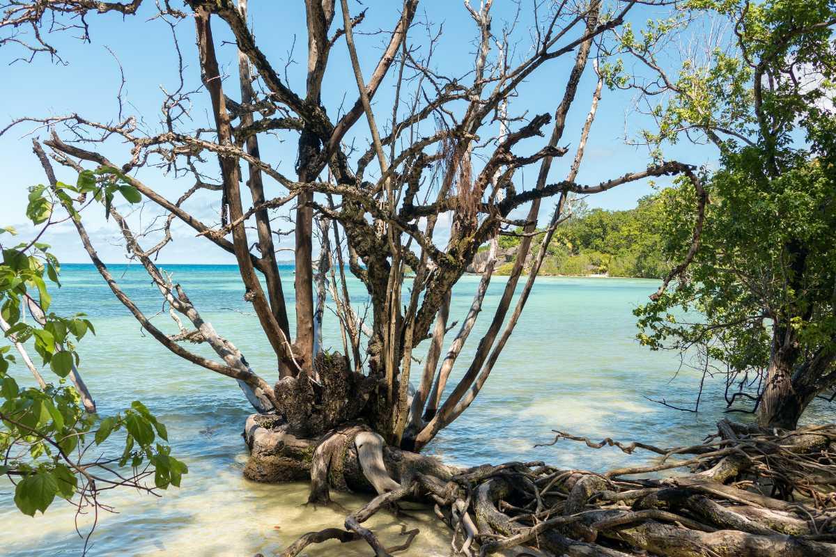 Curieuse Island Seychelles