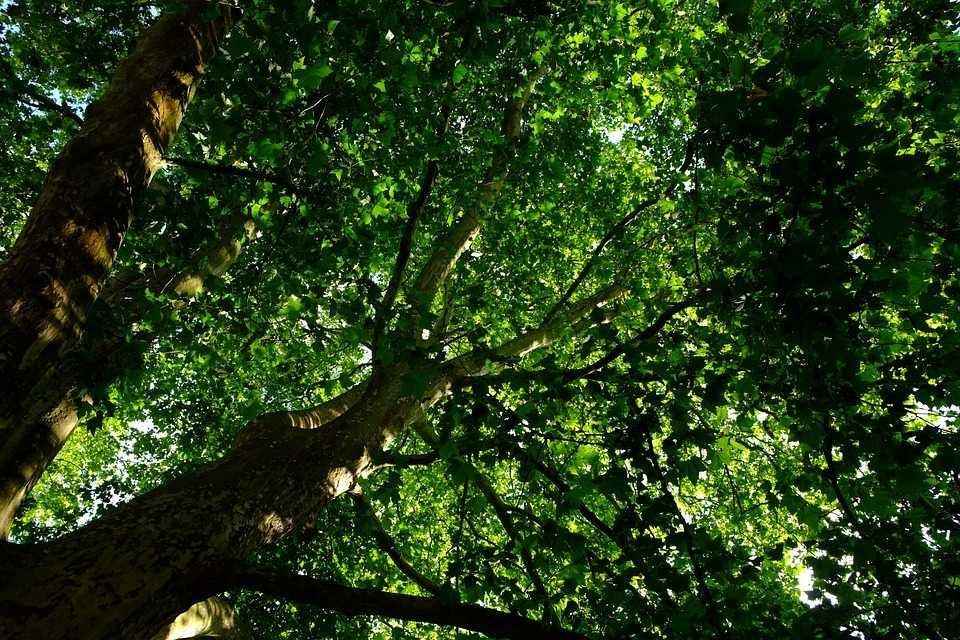 Beautiful Forest, Wildlife Sanctuaries in Bhutan