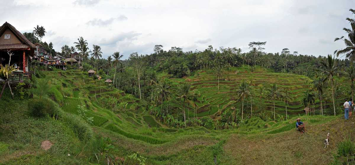 Panoramic View of Tegalalang Rice Terraces Ubud Bali