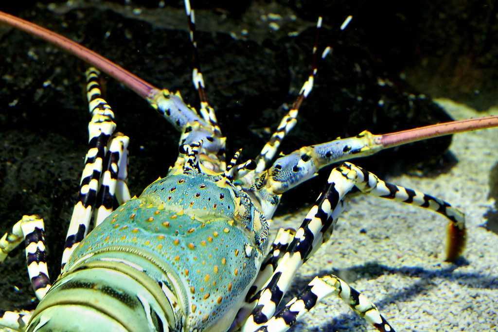 Underwater World in Langkawi