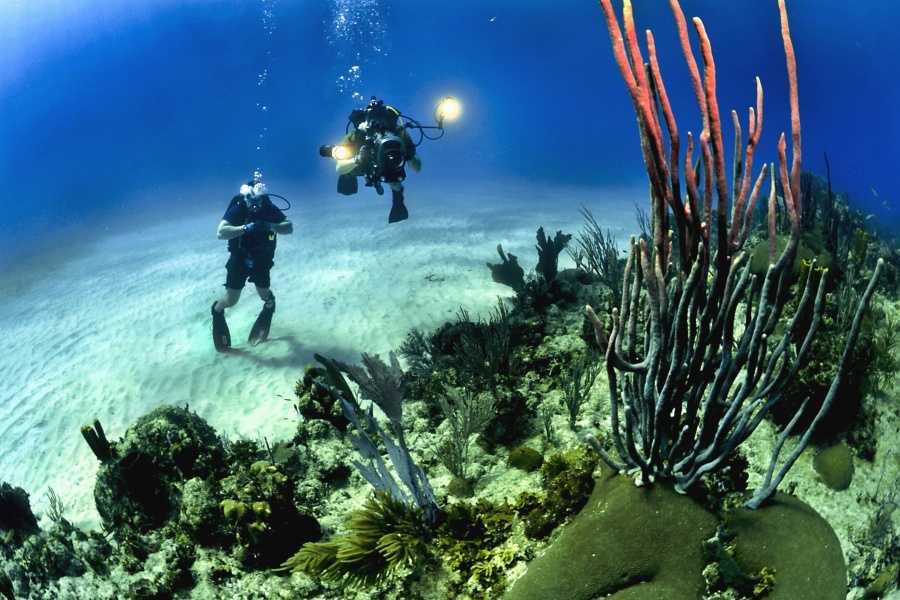 Scuba diving in Andaman Waters