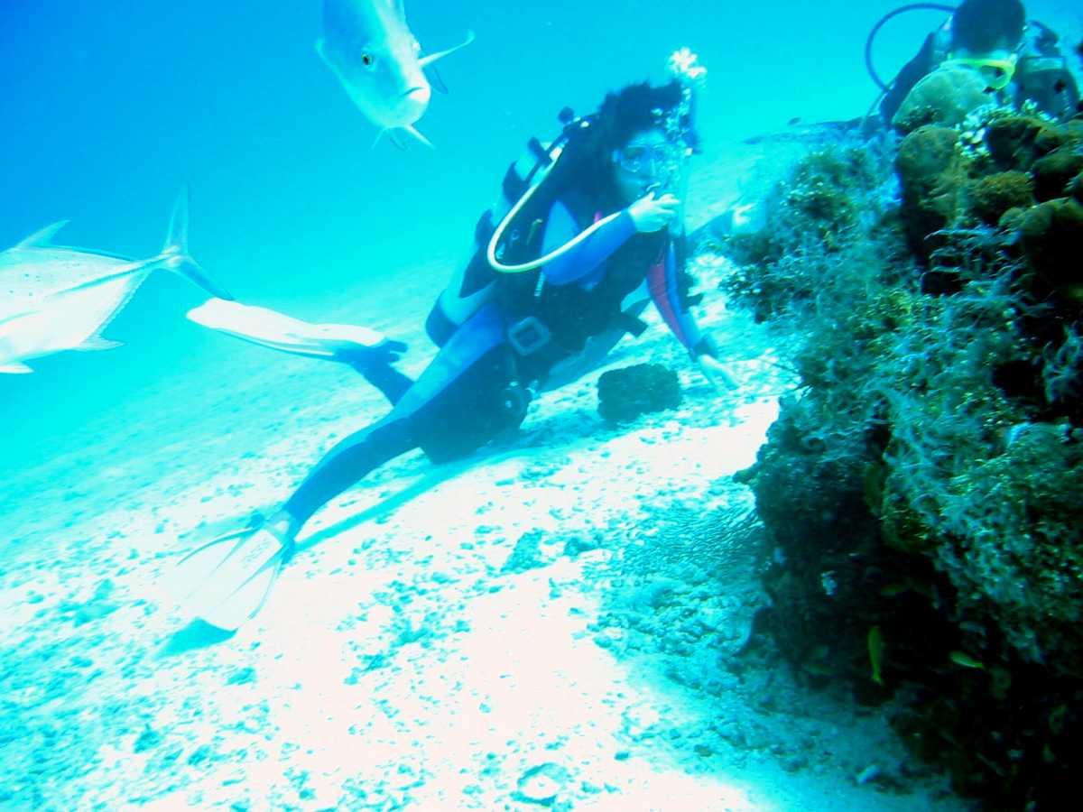 Scuba Diving in Bali, Menjangan Island