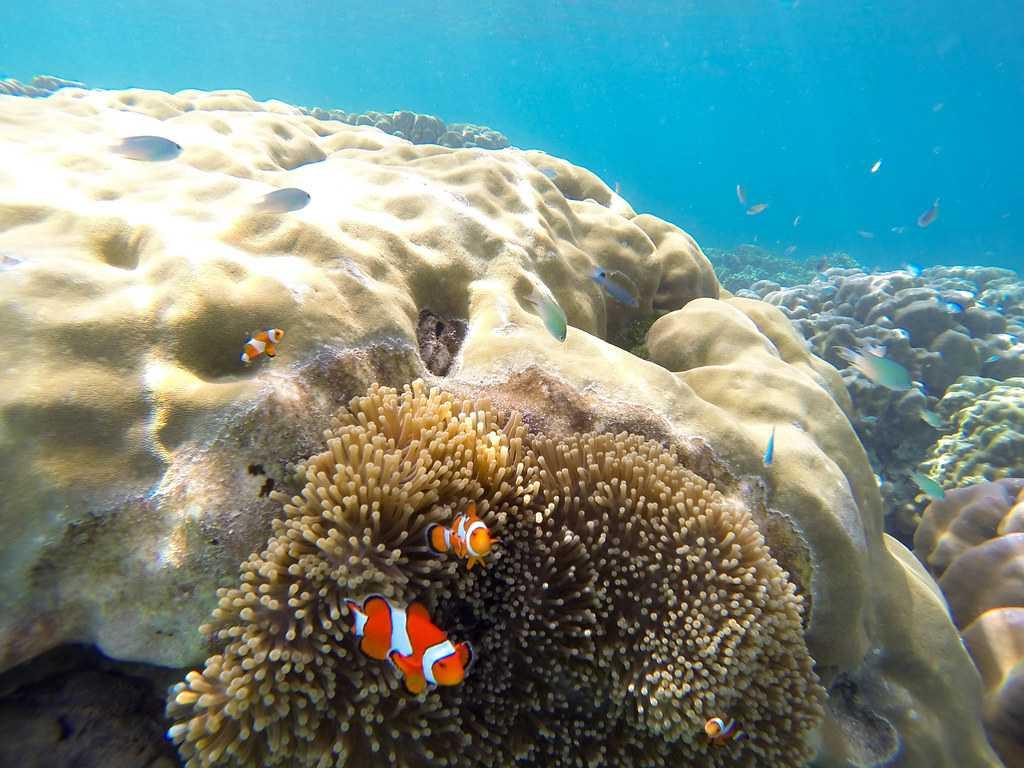 Corals at Surin Islands