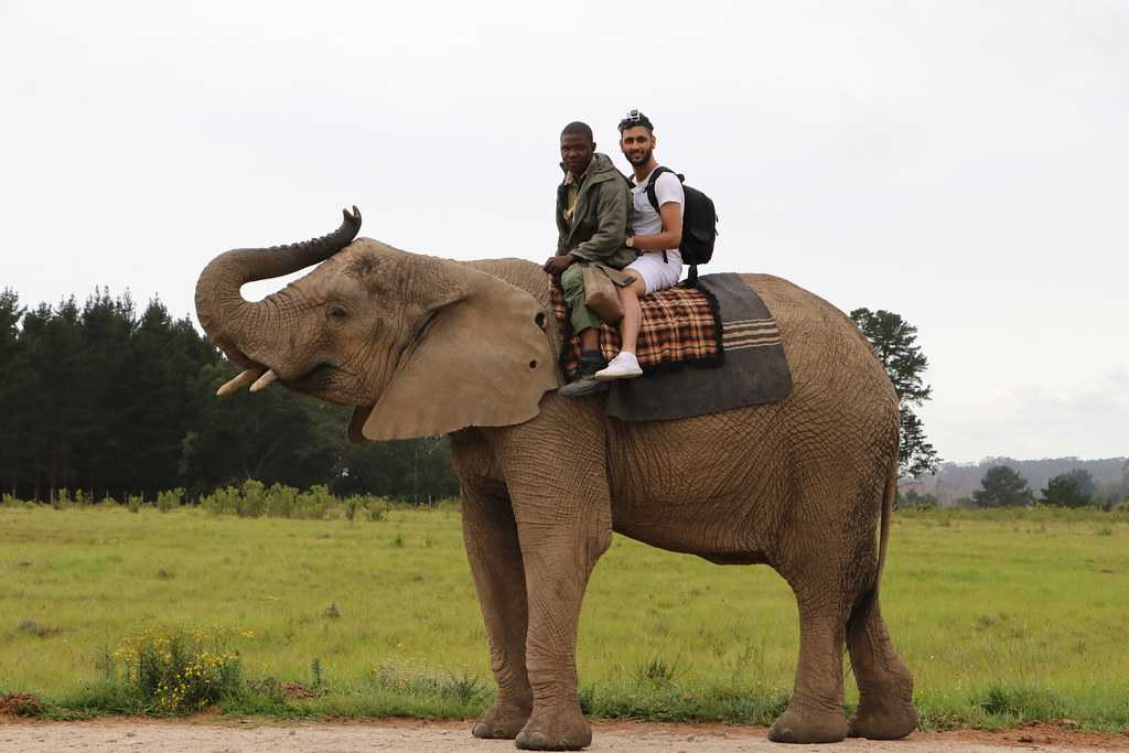 Elephant Rides in Bali