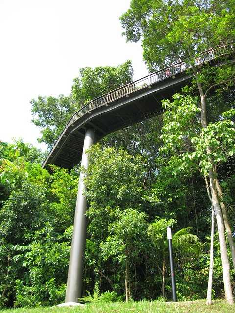 Canopy Walk along the Southern Ridges