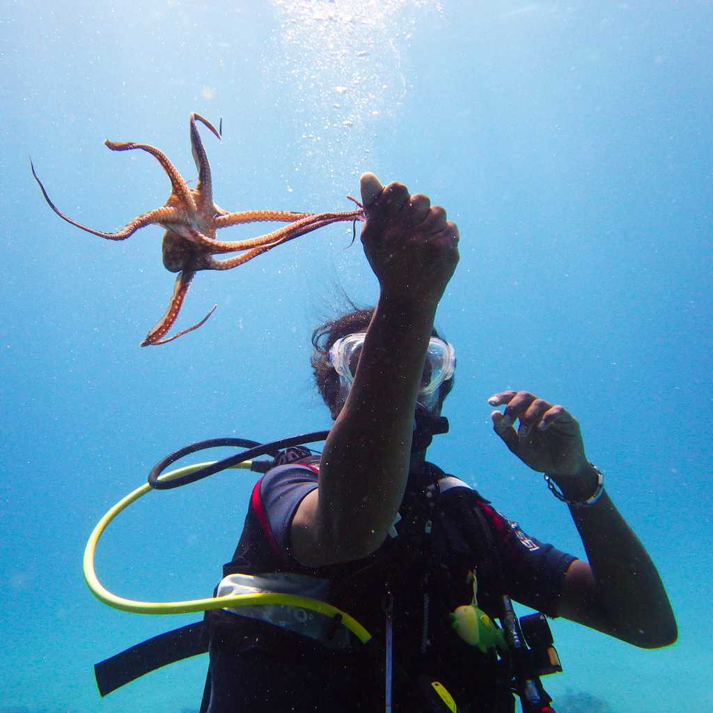 Scuba Diving with Marine Life