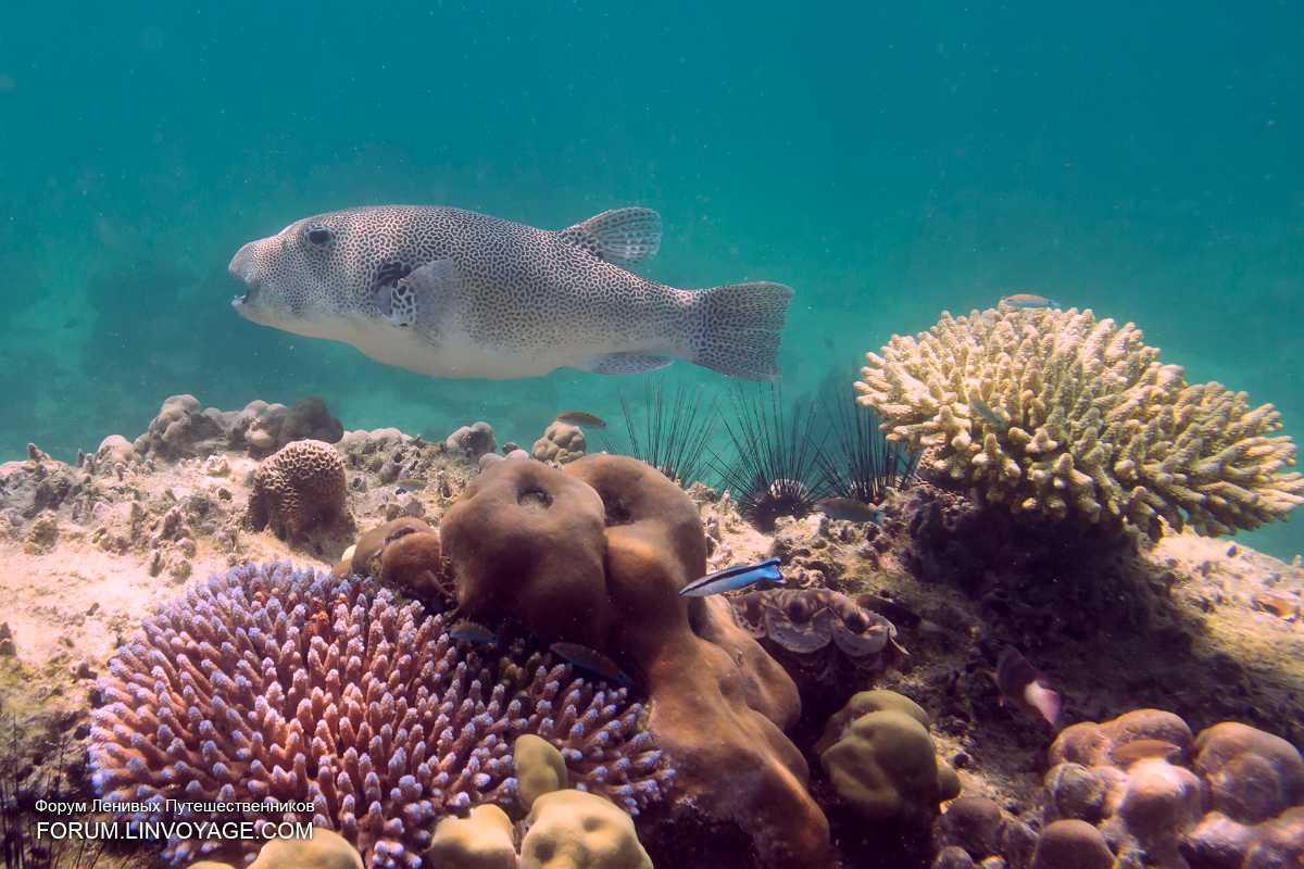 Coral Diving in Langkawi