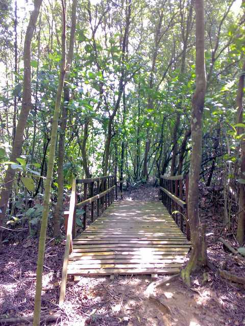 Kent Ridge Park Mountain Biking Trail