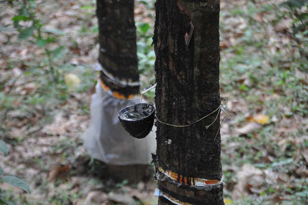 Rubber Plantation in Kerala, Facts about Kerala