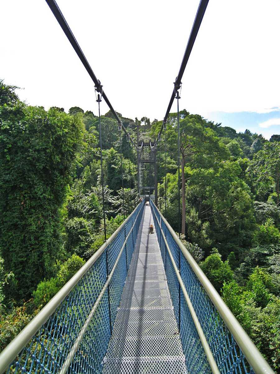 MacRitchie Reservoir Treetop Walk