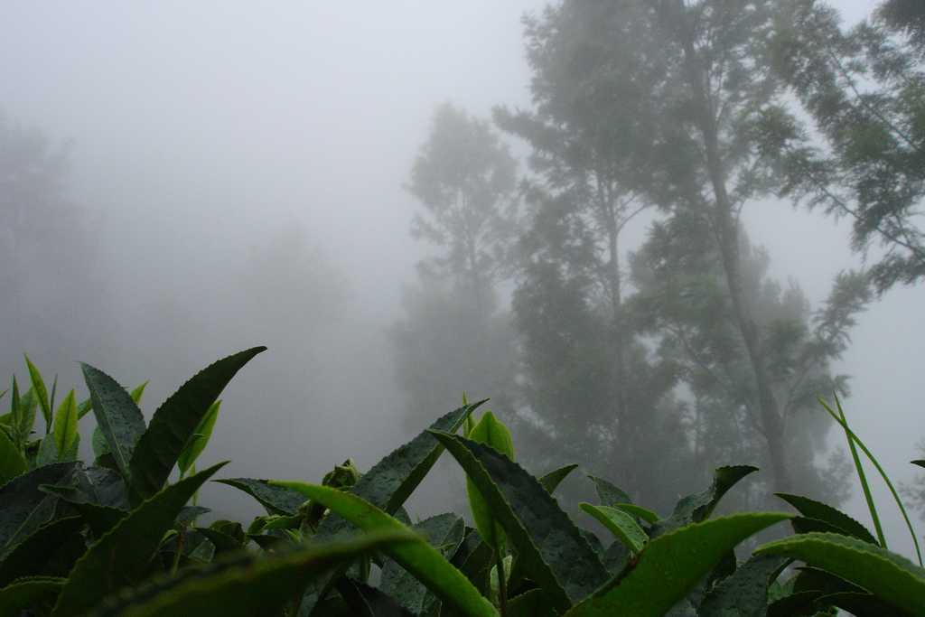 Mist in Kotagiri