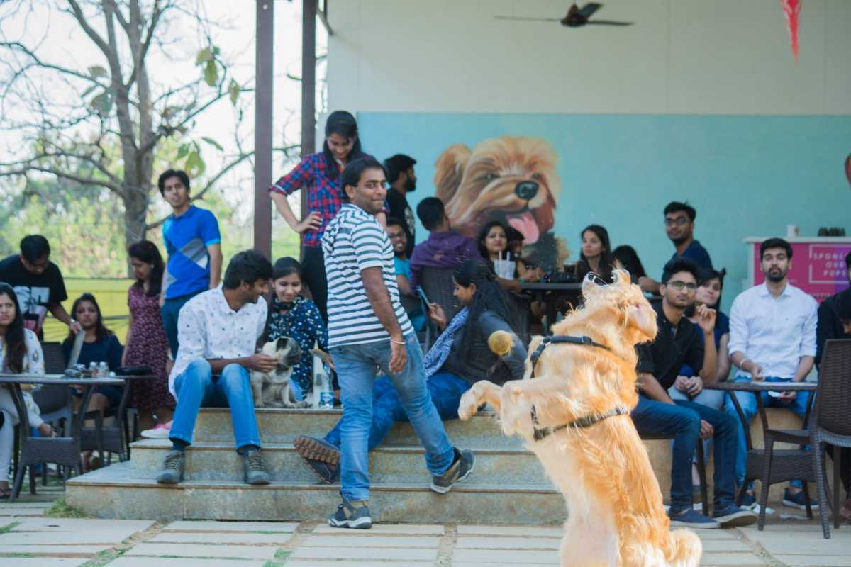 TherPup, Cafes in Bangalore