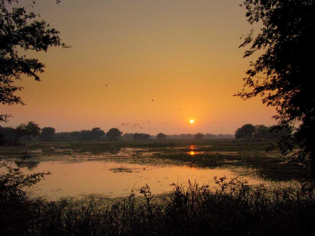 Winter Season, Bharatpur Bird Sanctuary