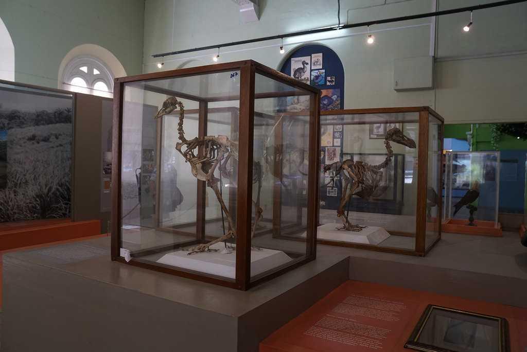 Natural History Museum, Mauritius