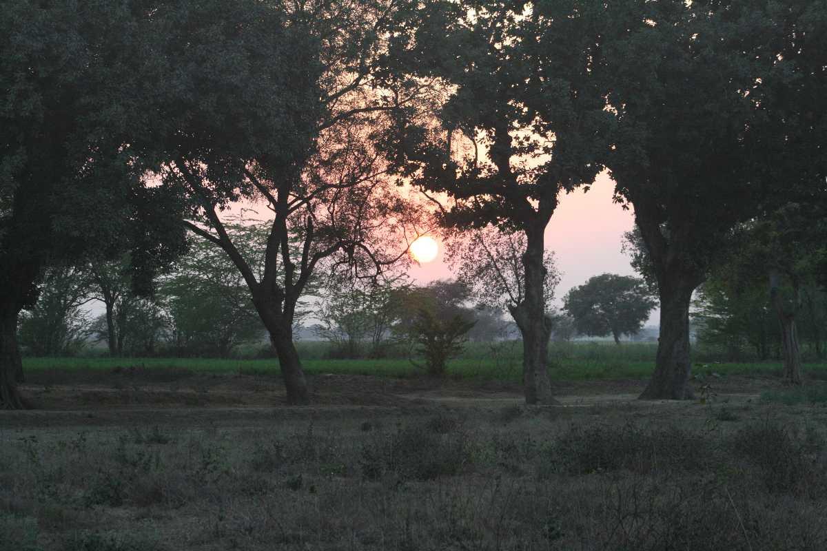Sunset at Chambal Safari Lodge