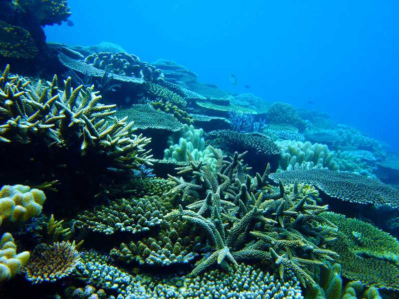 Coral reef at Pulau Bumbon Islands