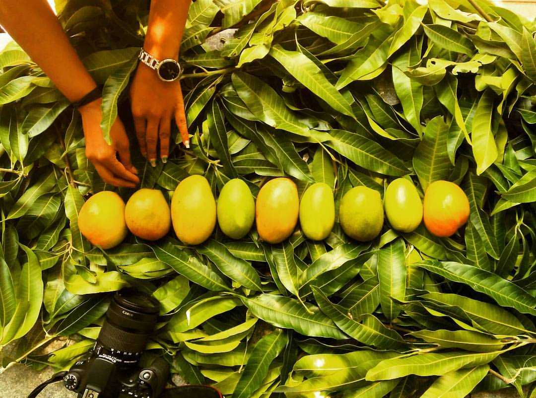 Mango, Festivals of India