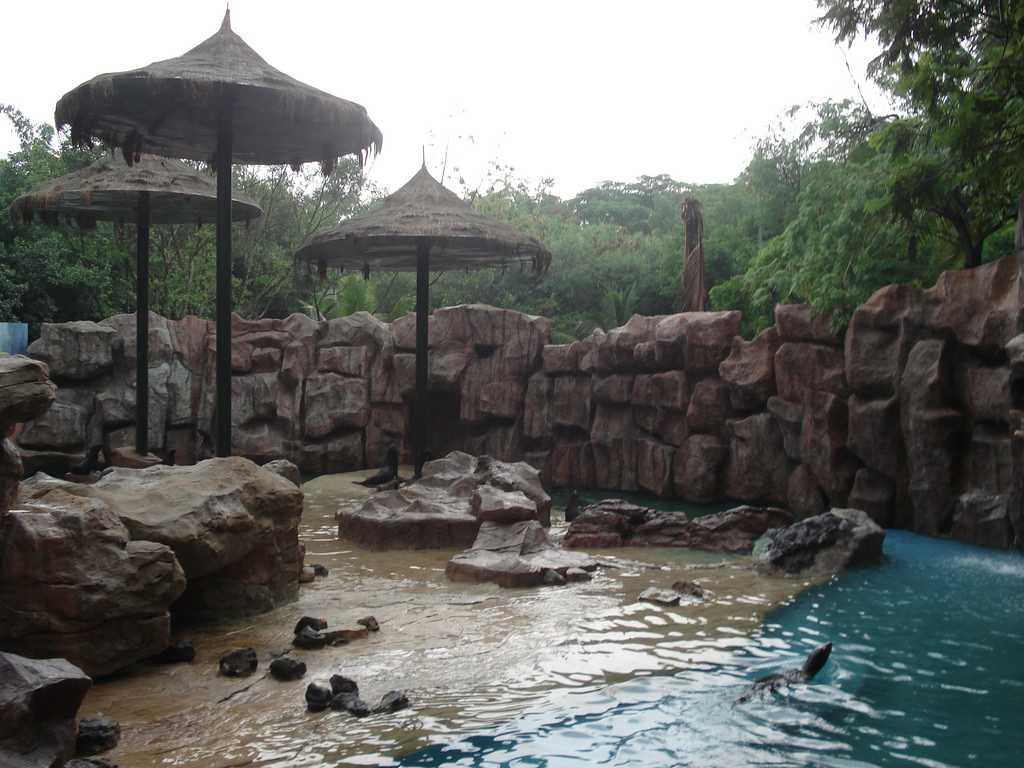 Sea Lions at Marine Park in Safari World Bangkok