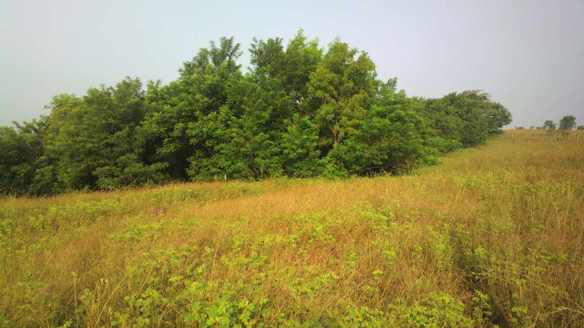 Refreshing Vetal Hill