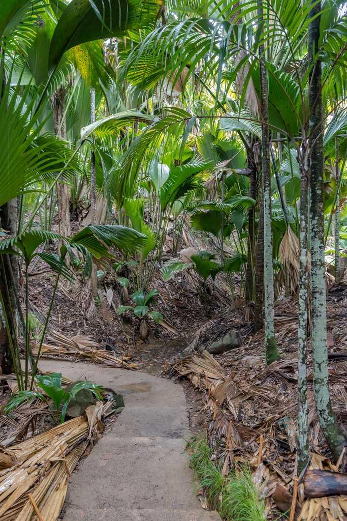 Vallee De Mai Nature Reserve