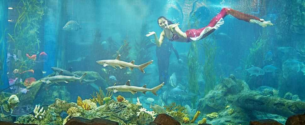 Mermaids at Vinpearl Aquarium Times City