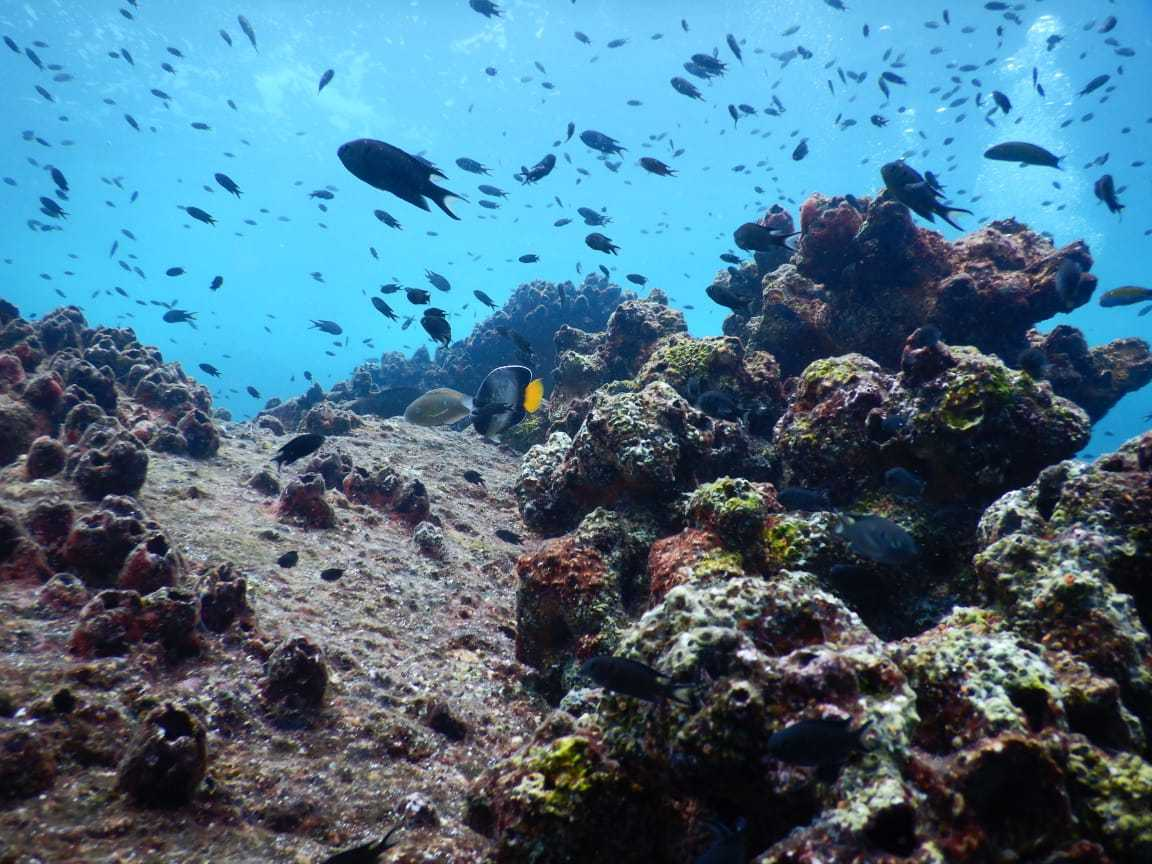 School of fish over coral reefs of Netrani Island