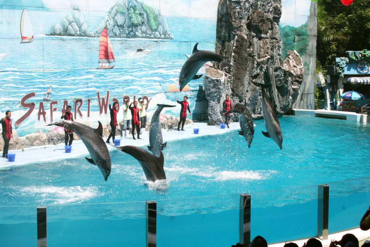 Dolphin Show at Safari World Bangkok