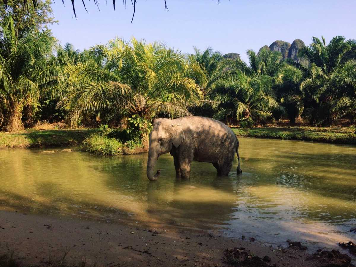 Elephant Sanctuary in Krabi