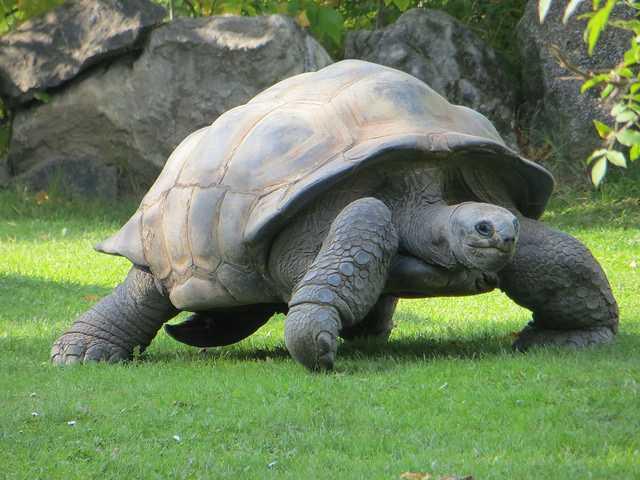 Aldabra giant tortoise, National Parks in Seychelles