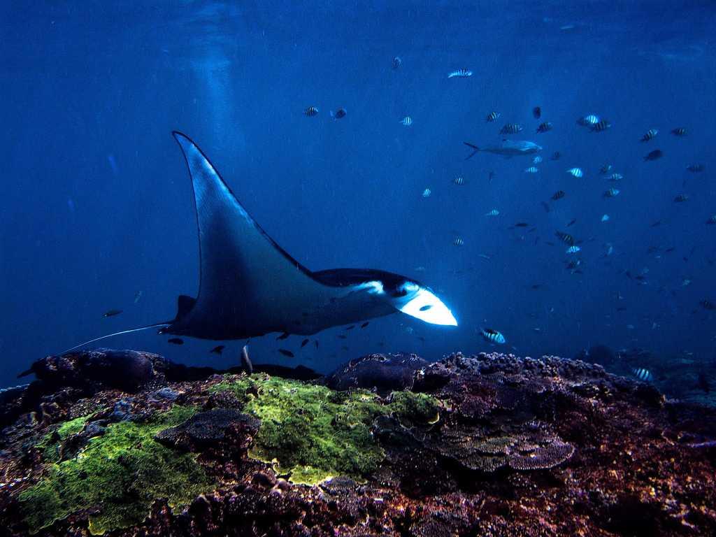 Honeymoon in Bali, Deep Sea Diving in Nusa Lembongan