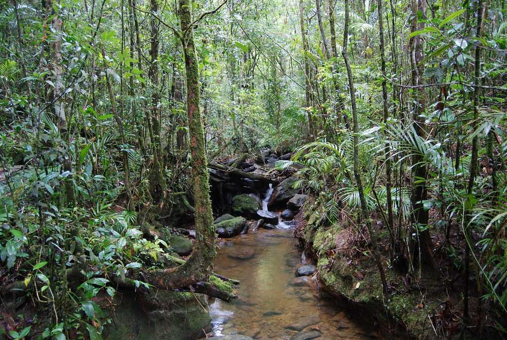 Kinabalu National Park