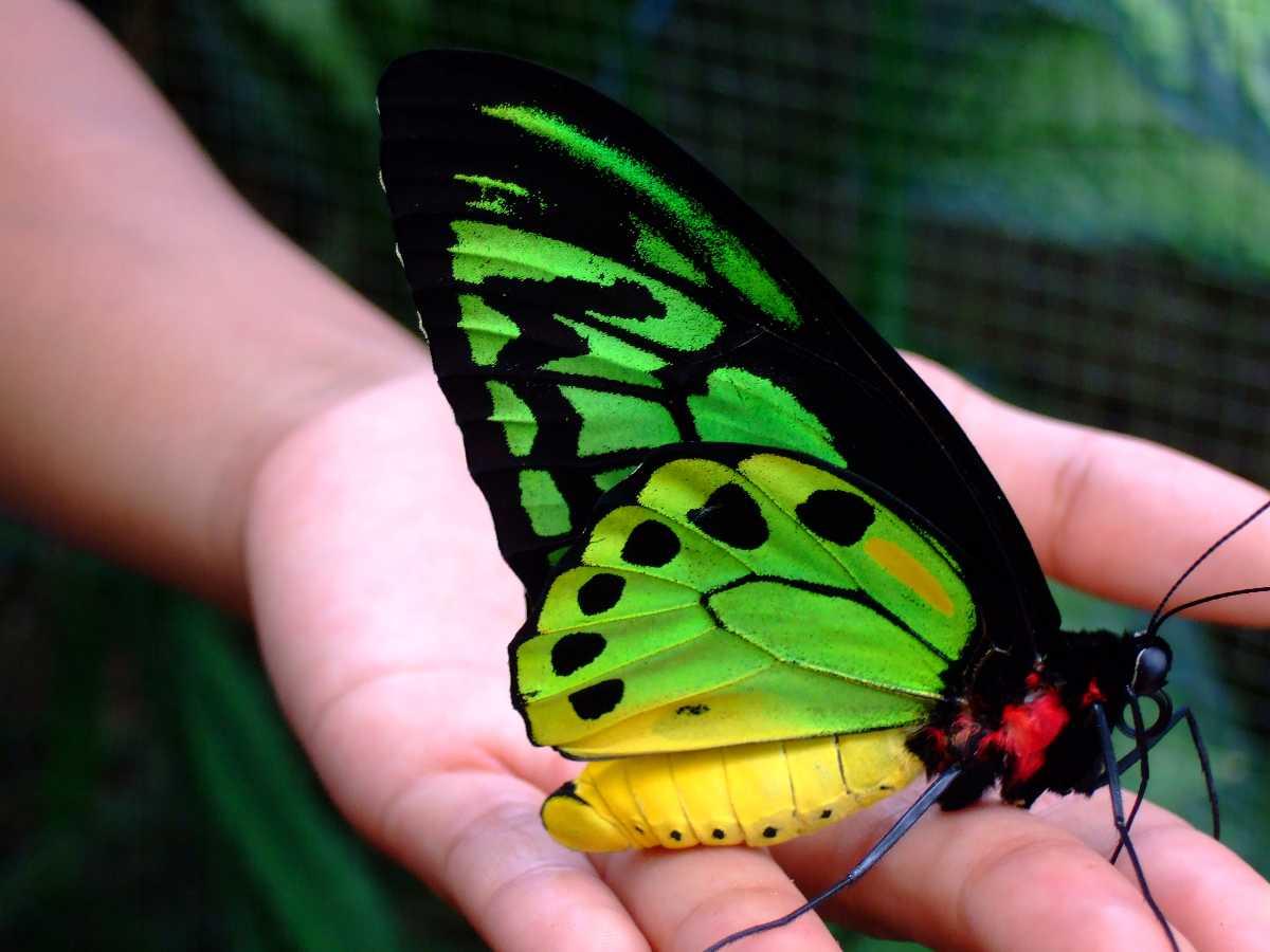 Bali Butterfy Park