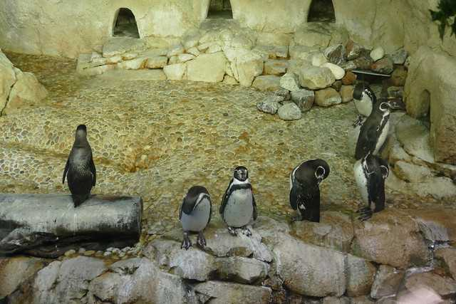 Penguins at Dubai Aquarium & Underwater Zoo
